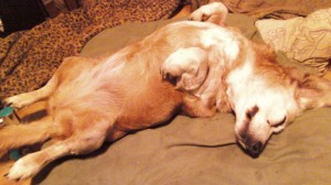 7-01-2012 lily out like a light